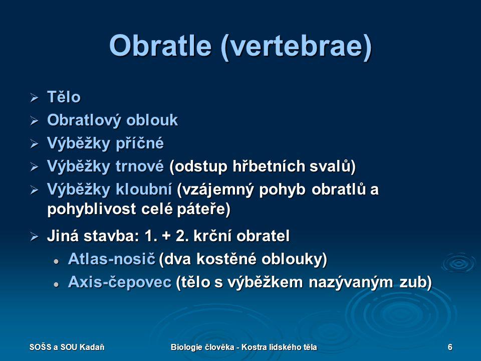 SOŠS a SOU KadaňBiologie člověka - Kostra lidského těla6 Obratle (vertebrae)  Tělo  Obratlový oblouk  Výběžky příčné  Výběžky trnové (odstup hřbet