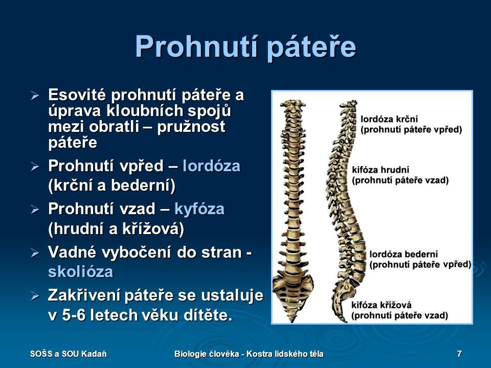 SOŠS a SOU KadaňBiologie člověka - Kostra lidského těla8 Stavba hrudníku  Kostěný podklad hrudníku – žebra (12 párů), hrudní obratle a hrudní kost  Žebra – protáhlé, obloukovité kosti kloubně připojené hlavičkami k obratlovým tělům, v přední části hrudníku doplněna chrupavkou připojující žebra k hrudní kosti  7 – žebra pravá – spojena samostatnou chrupavkou s hrudní kostí  3 – žebra nepravá – připojena chrupavkou k žebrům pravým  2 – žebra volně končící mezi svaly břišní stěny  Hrudní kost – plochá kost, složená z rukověti, vlastního těla a mečovitého výběžku