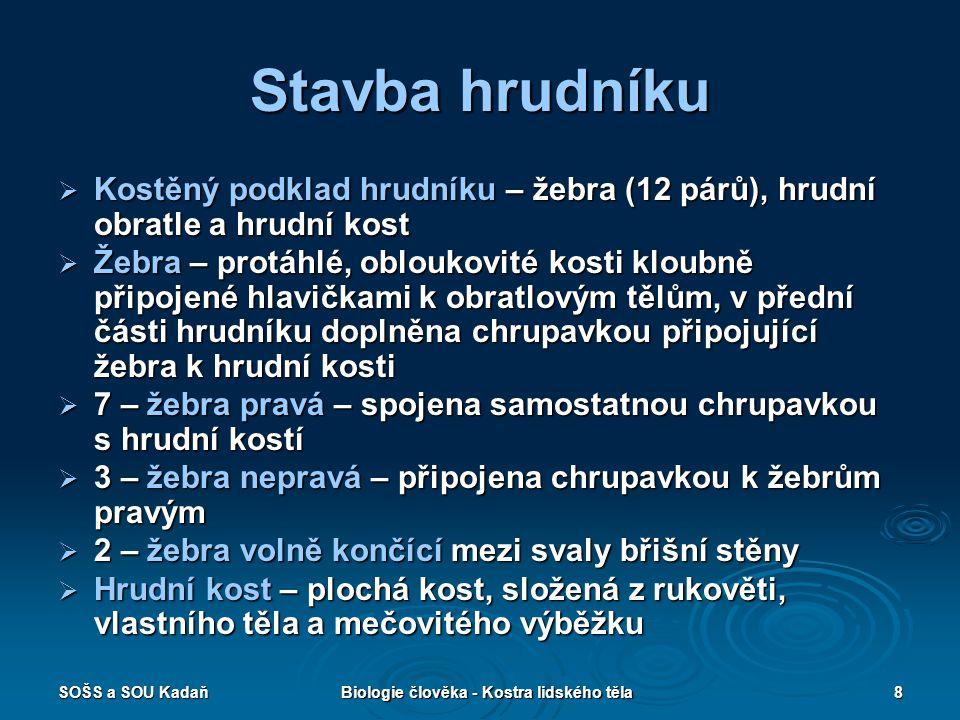 SOŠS a SOU KadaňBiologie člověka - Kostra lidského těla19 Poznávačka  Určete název kosti.