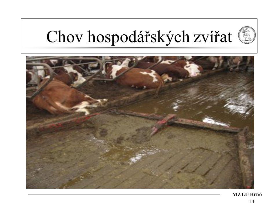 MZLU Brno Chov hospodářských zvířat 14