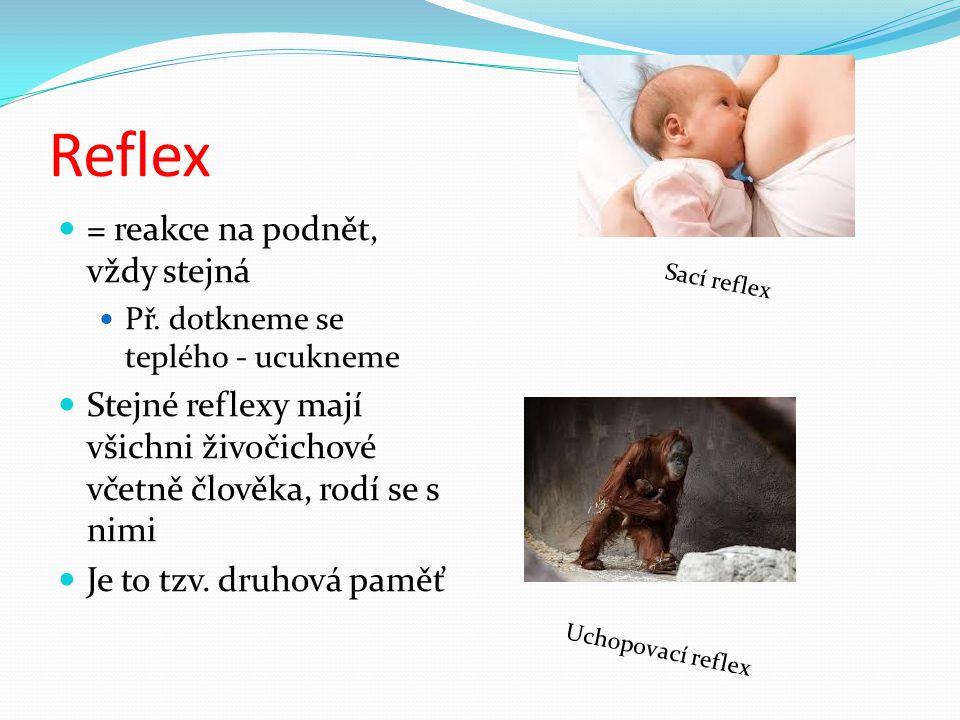 Reflex = reakce na podnět, vždy stejná Př. dotkneme se teplého - ucukneme Stejné reflexy mají všichni živočichové včetně člověka, rodí se s nimi Je to