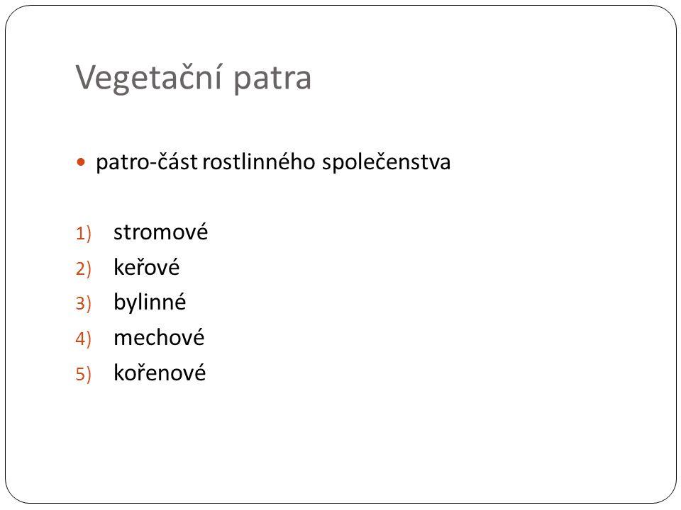 Vegetační patra patro-část rostlinného společenstva 1) stromové 2) keřové 3) bylinné 4) mechové 5) kořenové