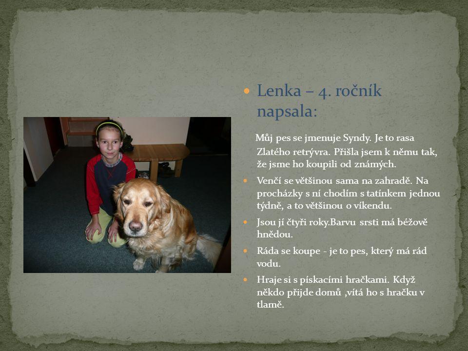 Lenka – 4. ročník napsala: Můj pes se jmenuje Syndy. Je to rasa Zlatého retrývra. Přišla jsem k němu tak, že jsme ho koupili od známých. Venčí se větš