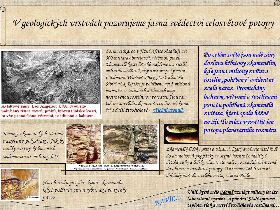 Kmeny zkamenělých stromů nazývané polystráty. Jak by mohly vrstvy kolem nich sedimentovat milióny let? Na obrázku je ryba, která zkameněla, když požír