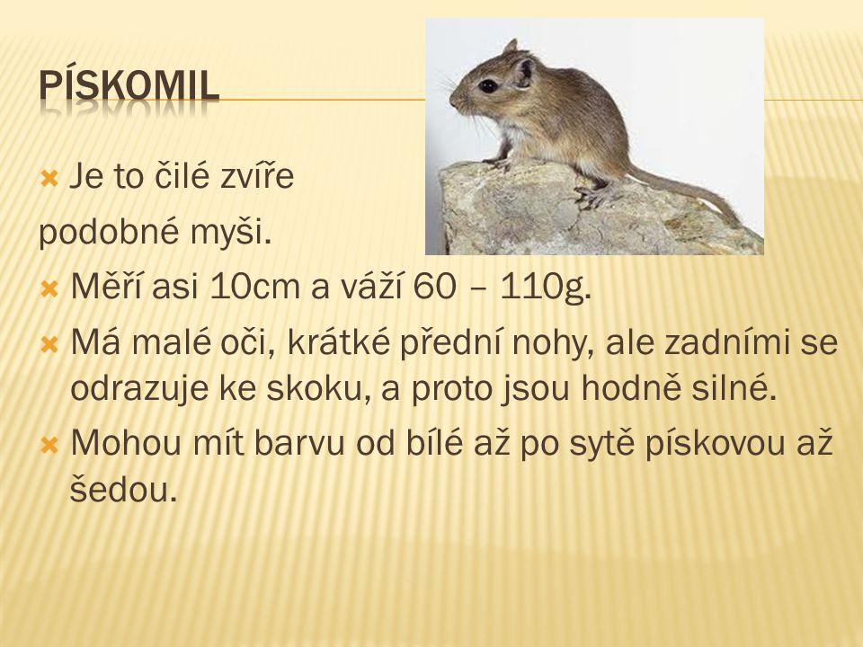  Je to čilé zvíře podobné myši. Měří asi 10cm a váží 60 – 110g.