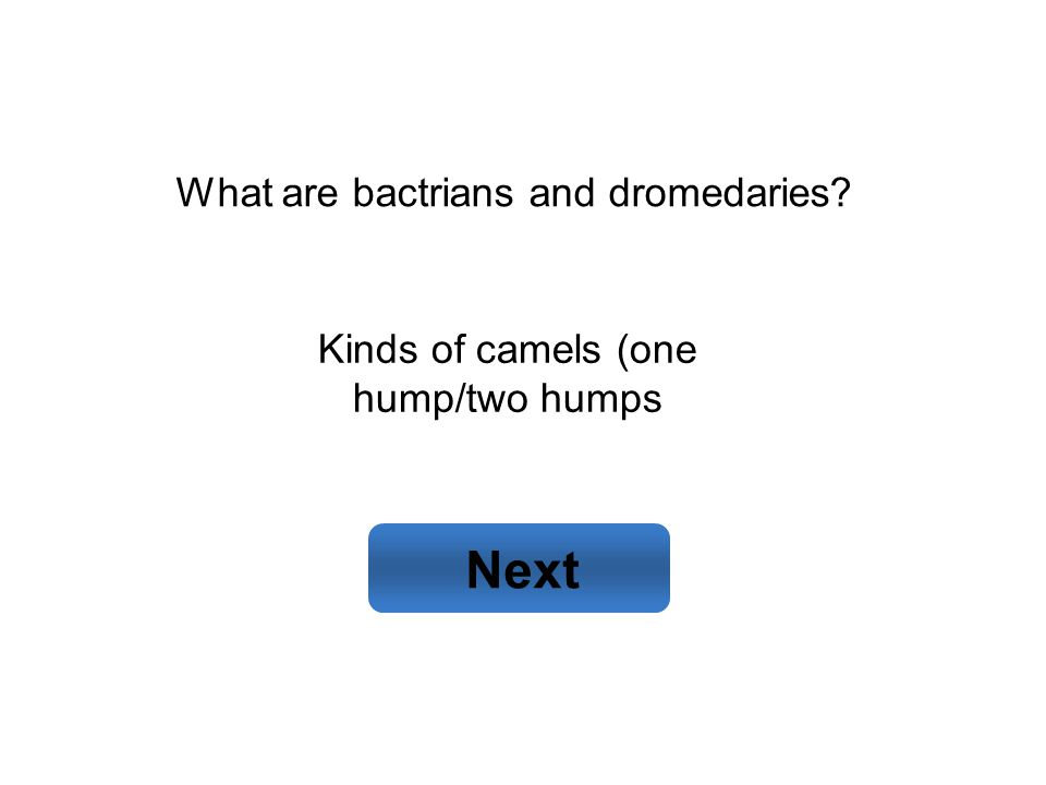 Kinds of camels (one hump/two humps Next What are bactrians and dromedaries?