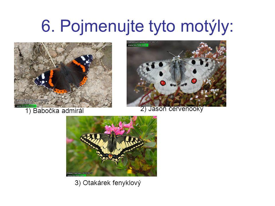 6. Pojmenujte tyto motýly: 1) Babočka admirál 2) Jasoň červenooký 3) Otakárek fenyklový