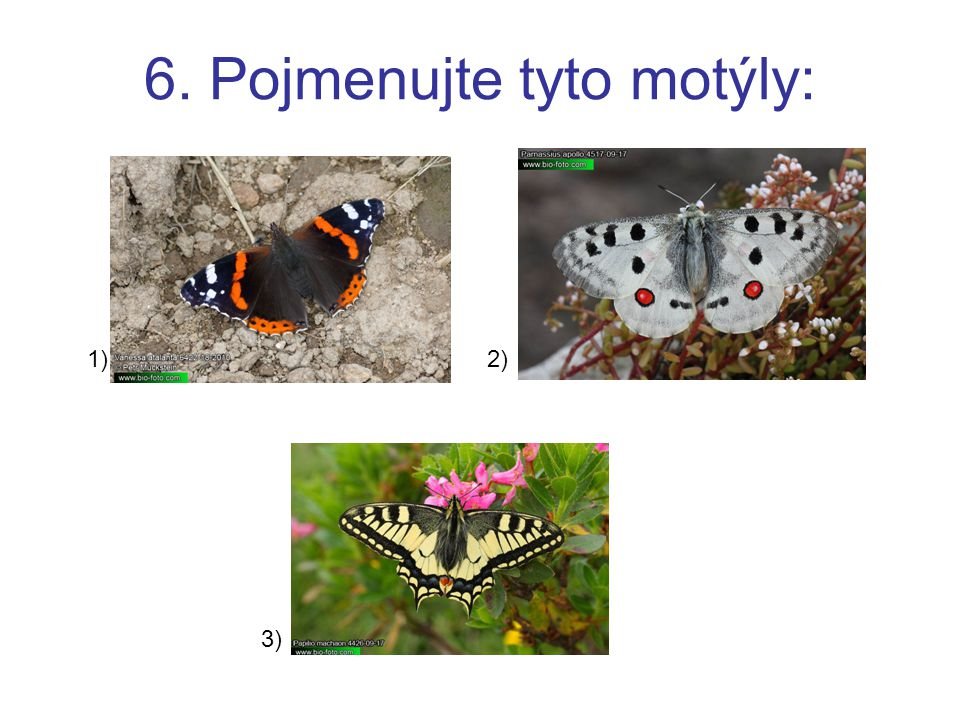 6. Pojmenujte tyto motýly: 1)2) 3)