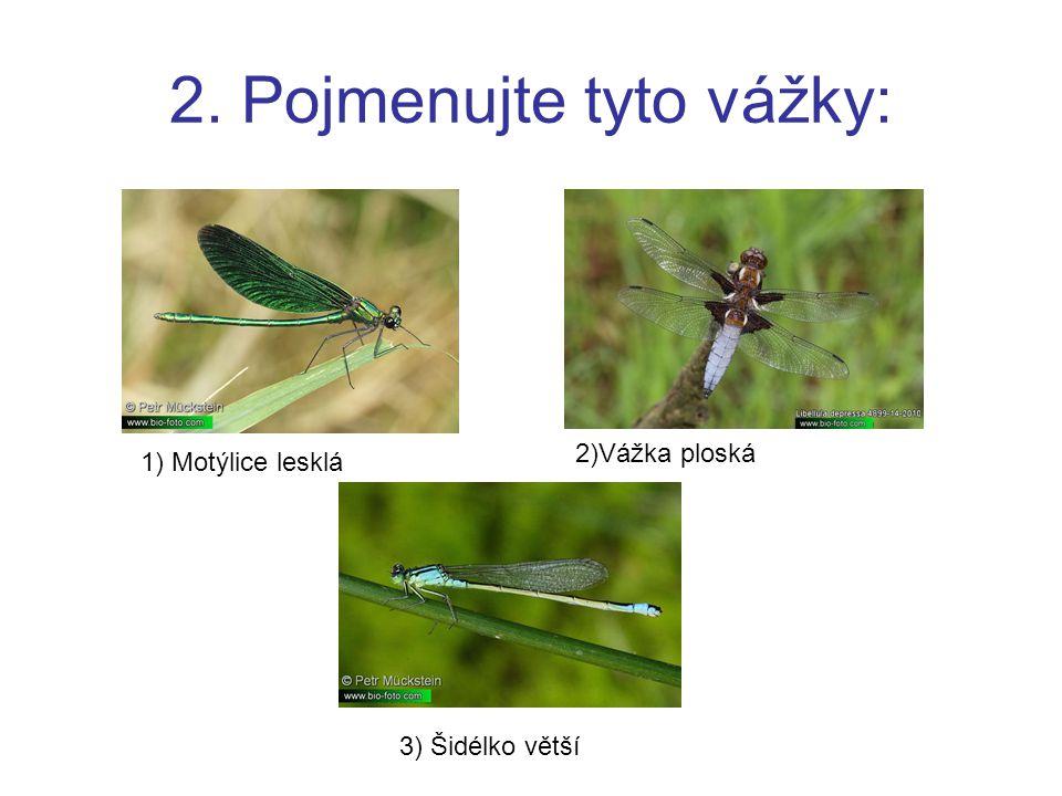 2. Pojmenujte tyto vážky: 1) Motýlice lesklá 2)Vážka ploská 3) Šidélko větší