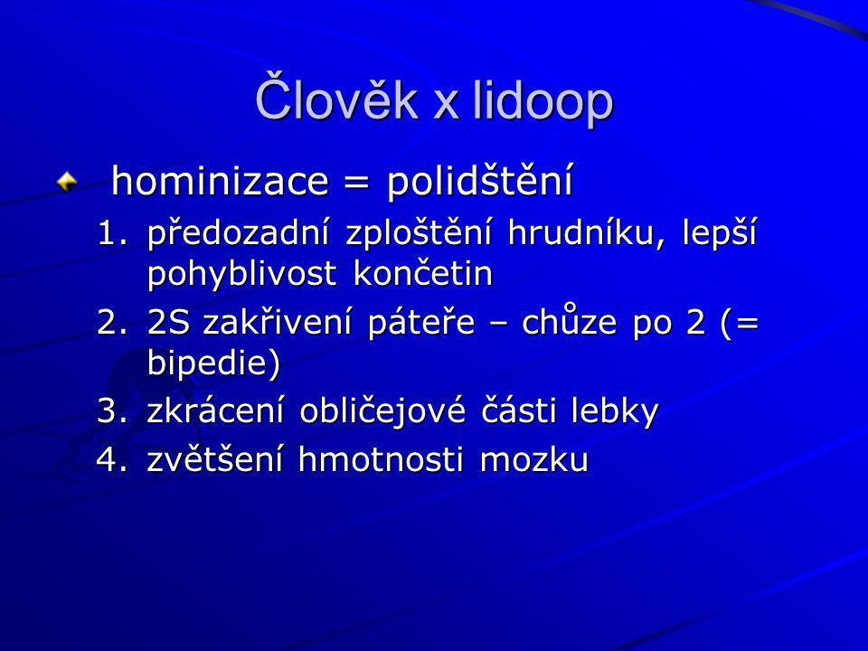 Člověk x lidoop hominizace = polidštění 1.předozadní zploštění hrudníku, lepší pohyblivost končetin 2.2S zakřivení páteře – chůze po 2 (= bipedie) 3.z