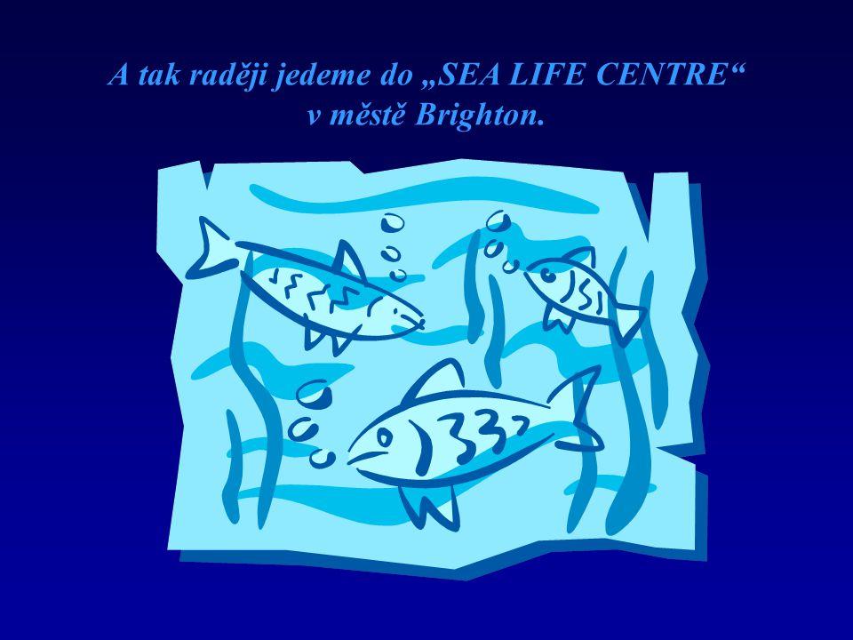 """A tak raději jedeme do """"SEA LIFE CENTRE v městě Brighton."""