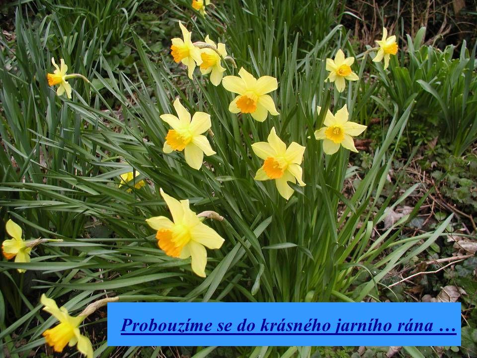 Probouzíme se do krásného jarního rána …