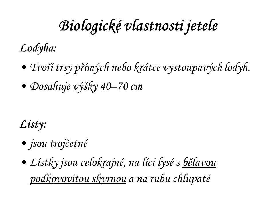 Biologické vlastnosti jetele Lodyha: Tvoří trsy přímých nebo krátce vystoupavých lodyh.