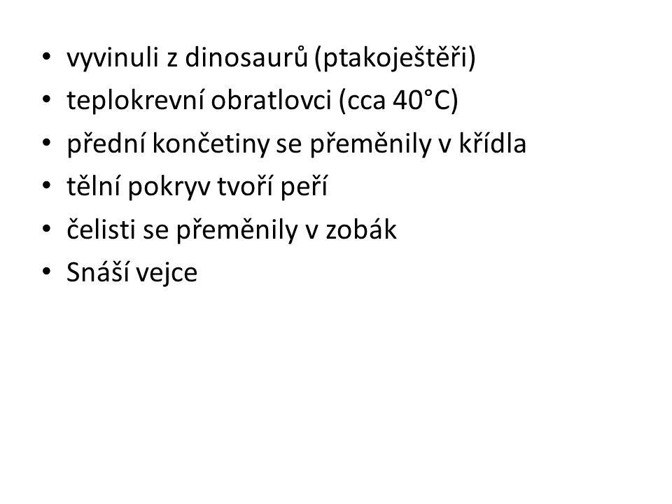 vyvinuli z dinosaurů (ptakoještěři) teplokrevní obratlovci (cca 40°C) přední končetiny se přeměnily v křídla tělní pokryv tvoří peří čelisti se přeměnily v zobák Snáší vejce