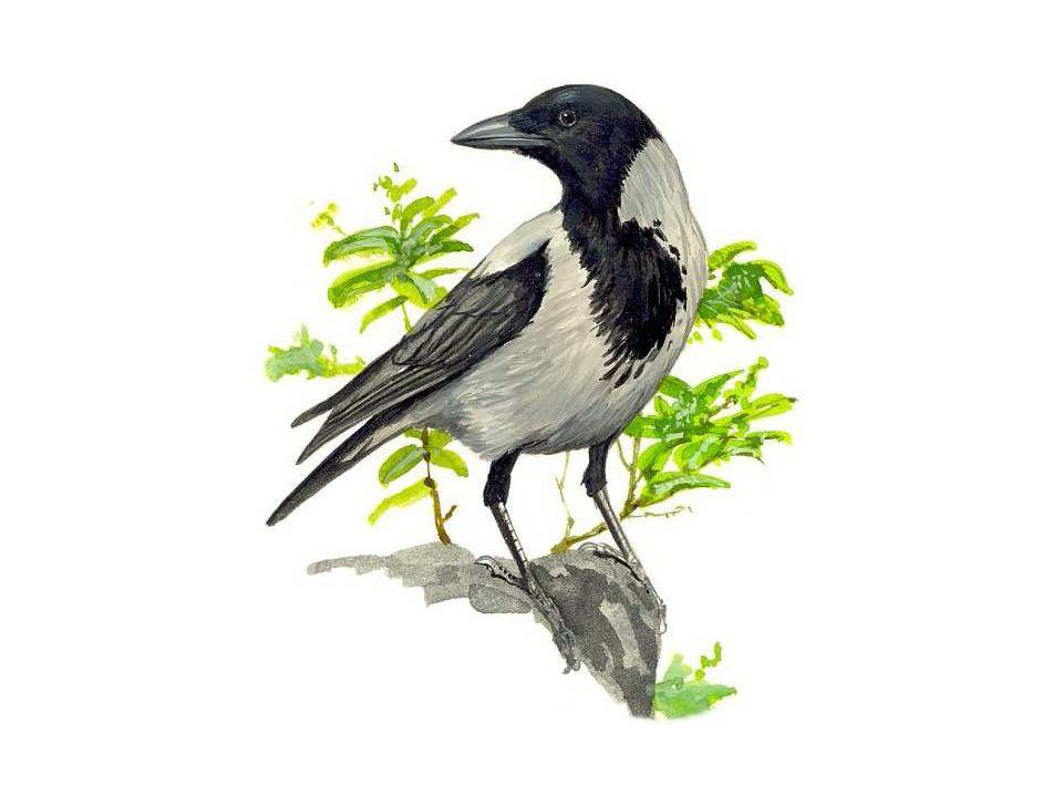 Tělo kryté suchou, tenkou pokožkou, ze které vyrůstá peří: peří obrysové peří krycí – kryje tělo, krk a hlavu letky – peří na křídlech rýdovací pera – pera na ocase peří prachové – leží pod peřím obrysovým, tvoří tepelnou izolaci Opeření se pravidelně obměňuje – říkáme, že ptáci pelichají.