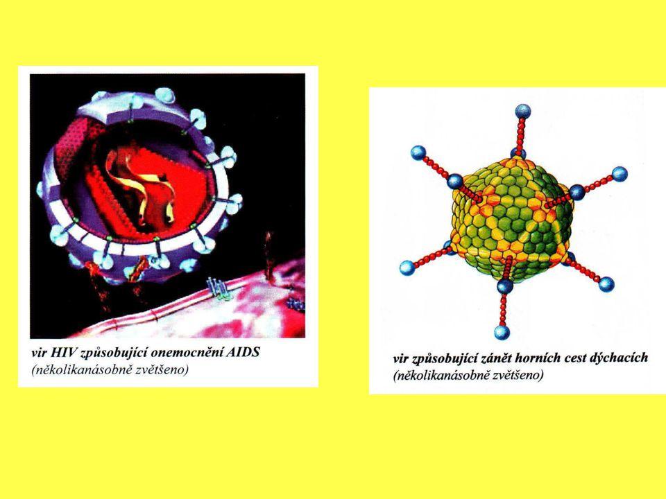 Virová nákaza může proniknout do lidského těla: Sliznicí dýchacího ústrojí Sliznicí trávicího ústrojí Sliznicí pohlavního ústrojí Porušenou kůží Transfúzí krve Nevydezinfikovanou injekční stříkačkou Virem AIDS může být nakaženo dítě přímo v těle matky