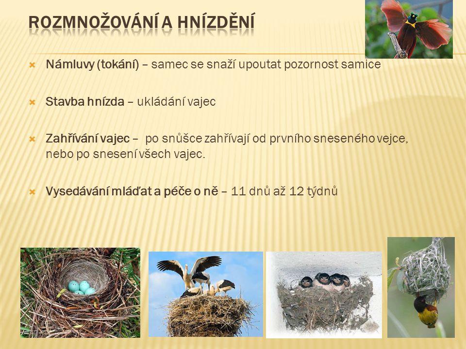  Námluvy (tokání) – samec se snaží upoutat pozornost samice  Stavba hnízda – ukládání vajec  Zahřívání vajec – po snůšce zahřívají od prvního sneseného vejce, nebo po snesení všech vajec.