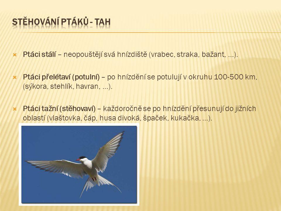  Ptáci stálí – neopouštějí svá hnízdiště (vrabec, straka, bažant, …).  Ptáci přelétaví (potulní) – po hnízdění se potulují v okruhu 100-500 km, (sýk