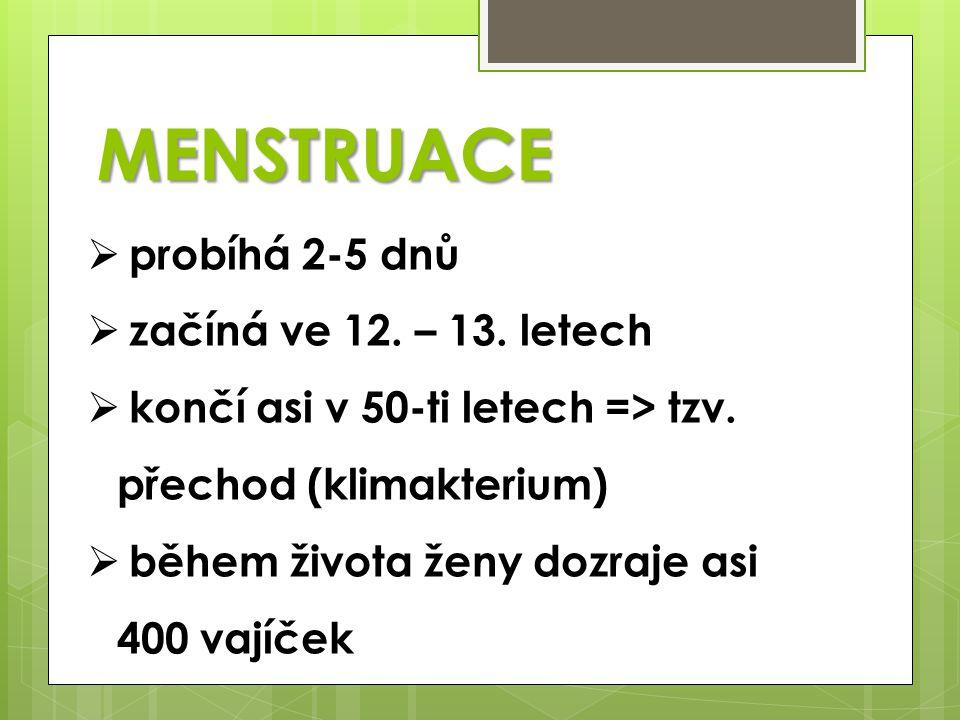 MENSTRUACE  probíhá 2-5 dnů  začíná ve 12. – 13. letech  končí asi v 50-ti letech => tzv. přechod (klimakterium)  během života ženy dozraje asi 40