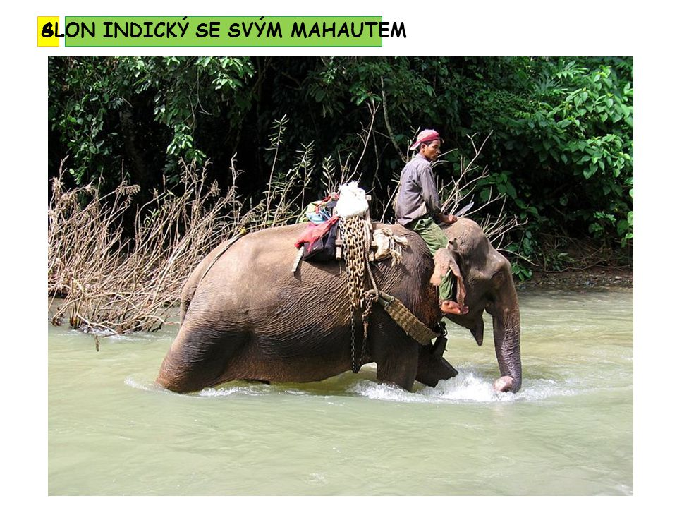 tropické deštné lesy - ustupují obdělávané půdě savany a monzunové lesy půdy – tropické půdy tropické červenozemě tmavohnědé půdy savan typičtí živočichové: tygr bengálský, slon indický, orangutan B IOTA