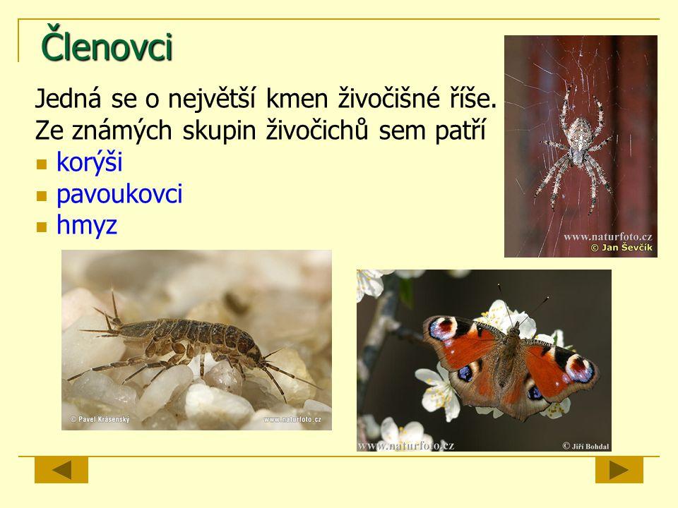 Členovci Jedná se o největší kmen živočišné říše. Ze známých skupin živočichů sem patří korýši pavoukovci hmyz