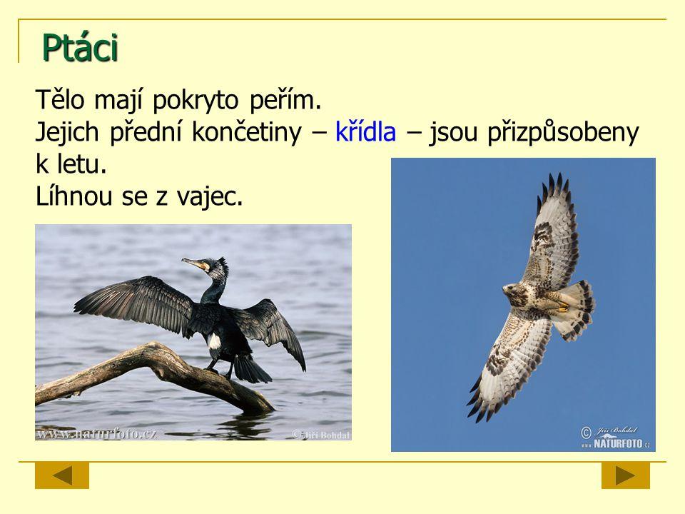 Ptáci Tělo mají pokryto peřím. Jejich přední končetiny – křídla – jsou přizpůsobeny k letu. Líhnou se z vajec.