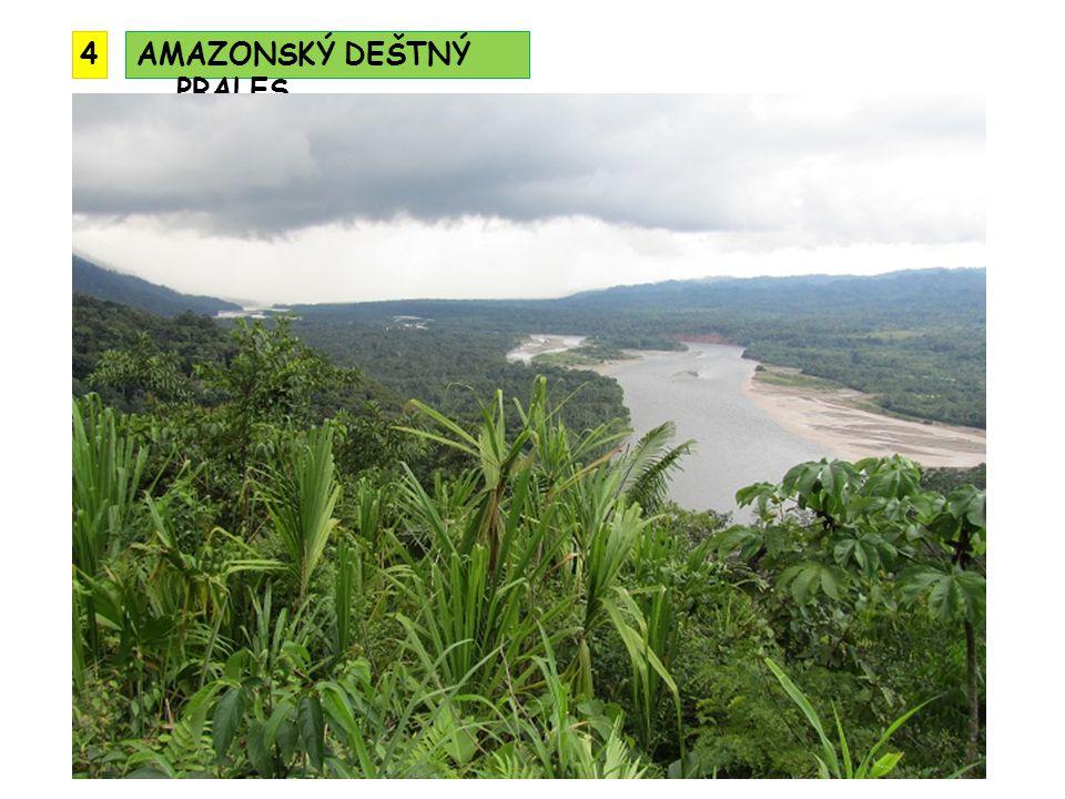 AMAZONSKÝ DEŠTNÝ PRALES 4