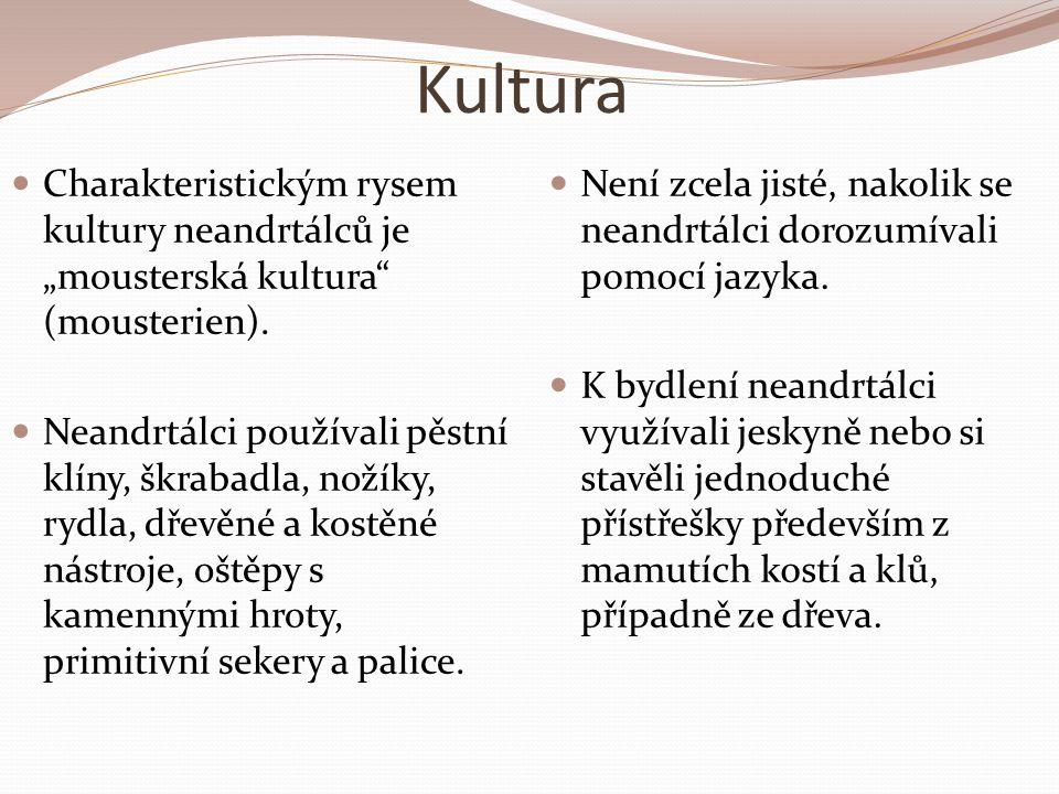 """Kultura Charakteristickým rysem kultury neandrtálců je """"mousterská kultura (mousterien)."""
