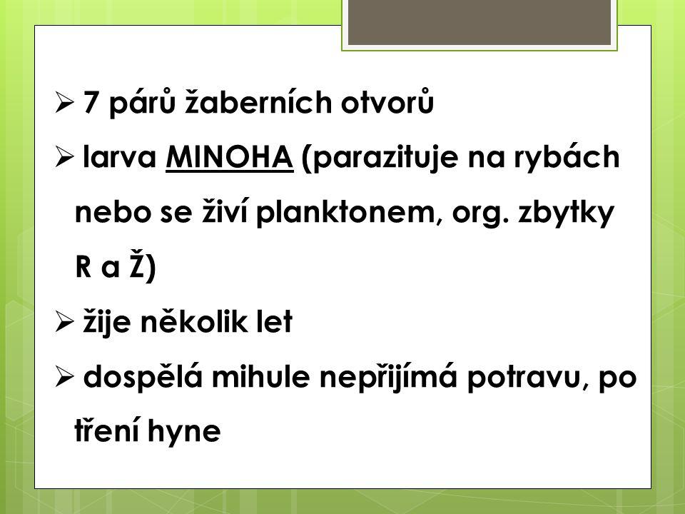  7 párů žaberních otvorů  larva MINOHA (parazituje na rybách nebo se živí planktonem, org. zbytky R a Ž)  žije několik let  dospělá mihule nepřijí