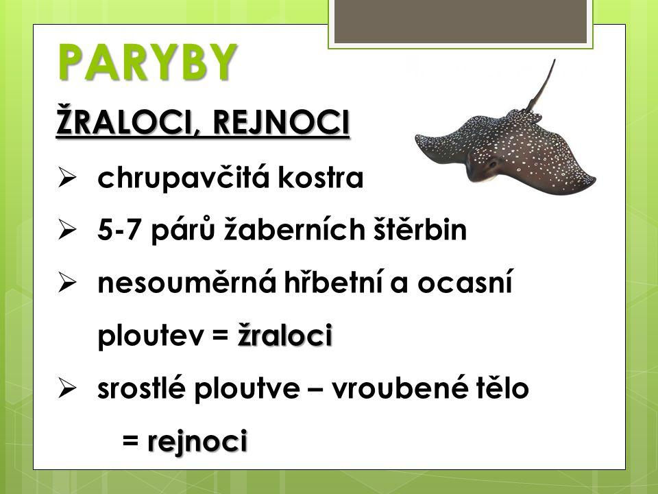 PARYBY ŽRALOCI, REJNOCI  chrupavčitá kostra  5-7 párů žaberních štěrbin žraloci  nesouměrná hřbetní a ocasní ploutev = žraloci rejnoci  srostlé pl