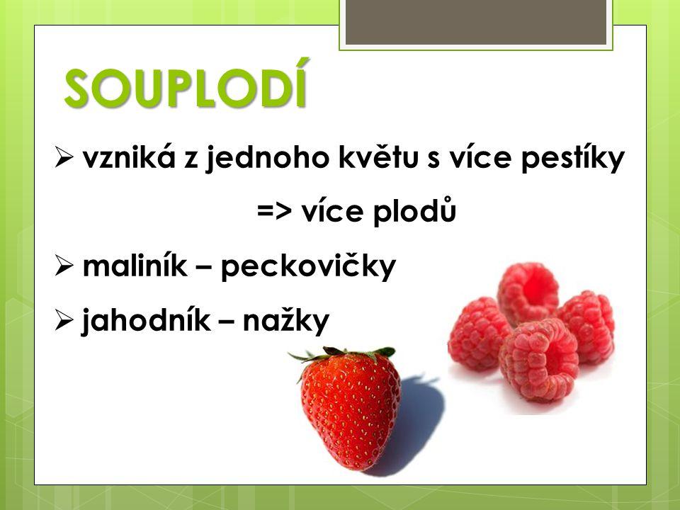 SOUPLODÍ  vzniká z jednoho květu s více pestíky => více plodů  maliník – peckovičky  jahodník – nažky
