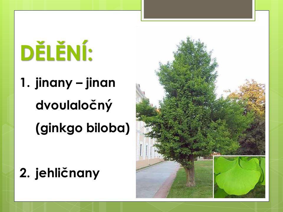 JEHLIČNANY  stálezelené dřeviny (stromy, keře)  jednoduché jehlicovité listy  odolnost vůči chladu a suchu  neopadavé listy (výjimka …?...