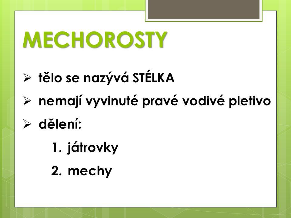  tělo se nazývá STÉLKA  nemají vyvinuté pravé vodivé pletivo  dělení: 1.játrovky 2.mechy MECHOROSTY