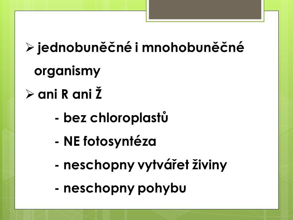  jednobuněčné i mnohobuněčné organismy  ani R ani Ž - bez chloroplastů - NE fotosyntéza - neschopny vytvářet živiny - neschopny pohybu