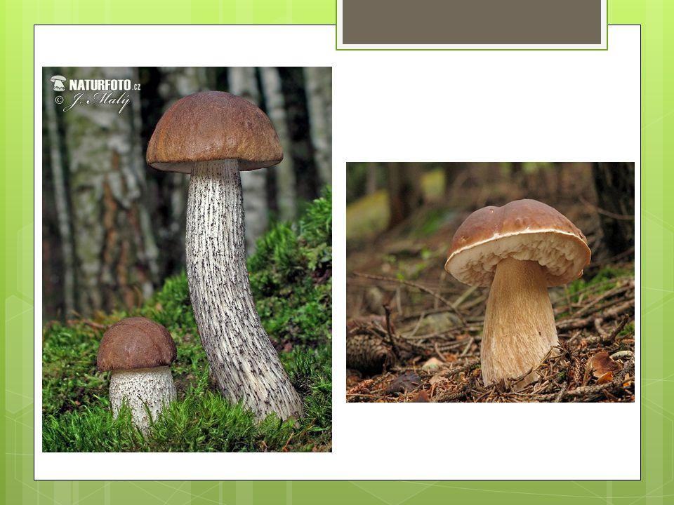  zvláštní případy symbiózy - houba + lišejník - houba + sinice 2.