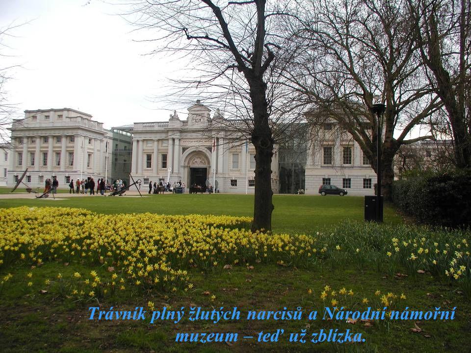 Trávník plný žlutých narcisů a Národní námořní muzeum – teď už zblízka.