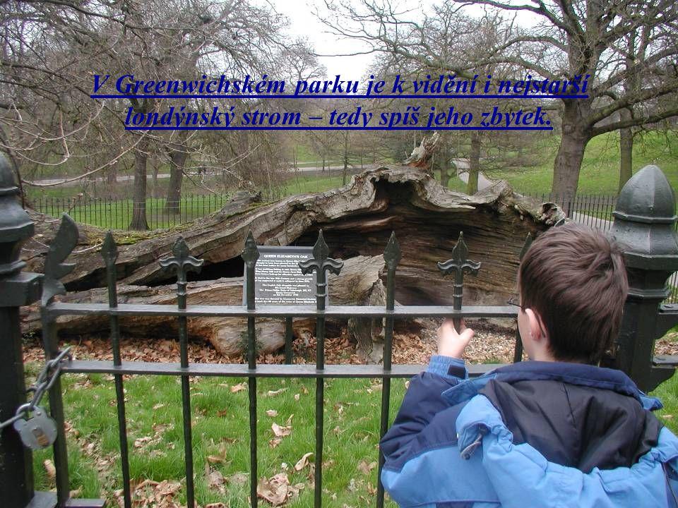 V Greenwichském parku je k vidění i nejstarší londýnský strom – tedy spíš jeho zbytek.