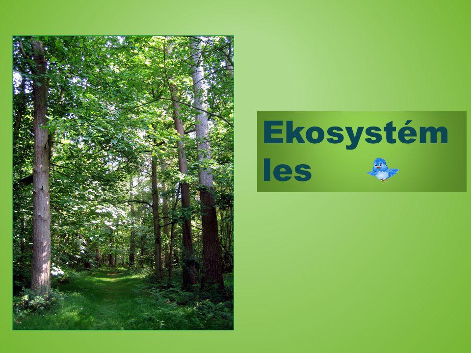 V hodinách přírodovědy si žáci připravili projekt na téma ekosystém les a ekosystém okolí lidských obydlí. S naším projektem jsme seznámili žáky třídy
