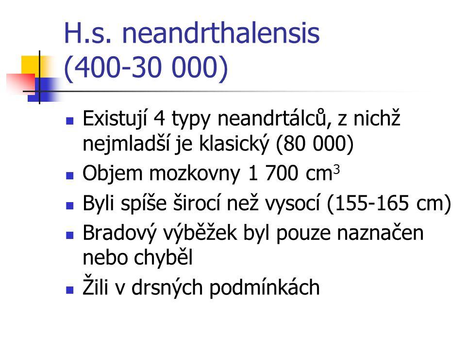 H.s. neandrthalensis (400-30 000) Existují 4 typy neandrtálců, z nichž nejmladší je klasický (80 000) Objem mozkovny 1 700 cm 3 Byli spíše širocí než