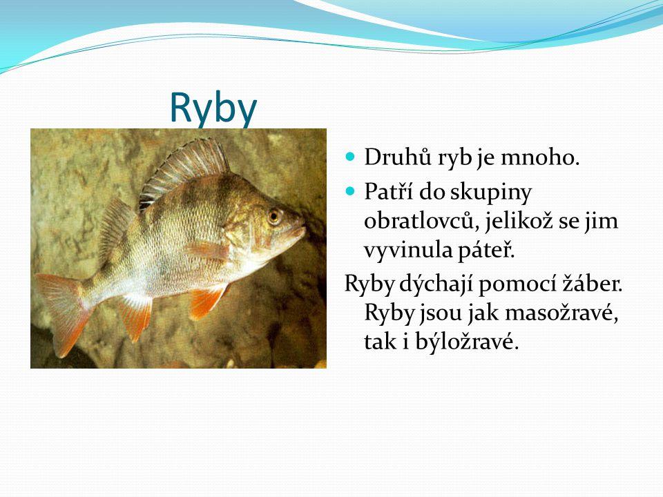 Ryby Druhů ryb je mnoho. Patří do skupiny obratlovců, jelikož se jim vyvinula páteř. Ryby dýchají pomocí žáber. Ryby jsou jak masožravé, tak i býložra