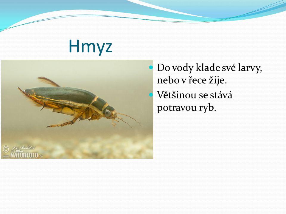 Hmyz Do vody klade své larvy, nebo v řece žije. Většinou se stává potravou ryb.