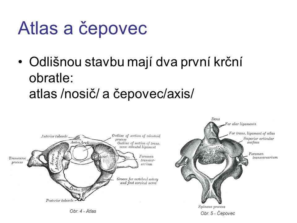 Atlas (nosič) má prstenčitý tvar, nemá vlastní tělo, má 2 oblouky a na jeho horní straně jsou 2 kloubní jamky zde je připojena lebka /týlní kost/ a díky kloubním spojením je umožněn kývavý pohyb hlavy