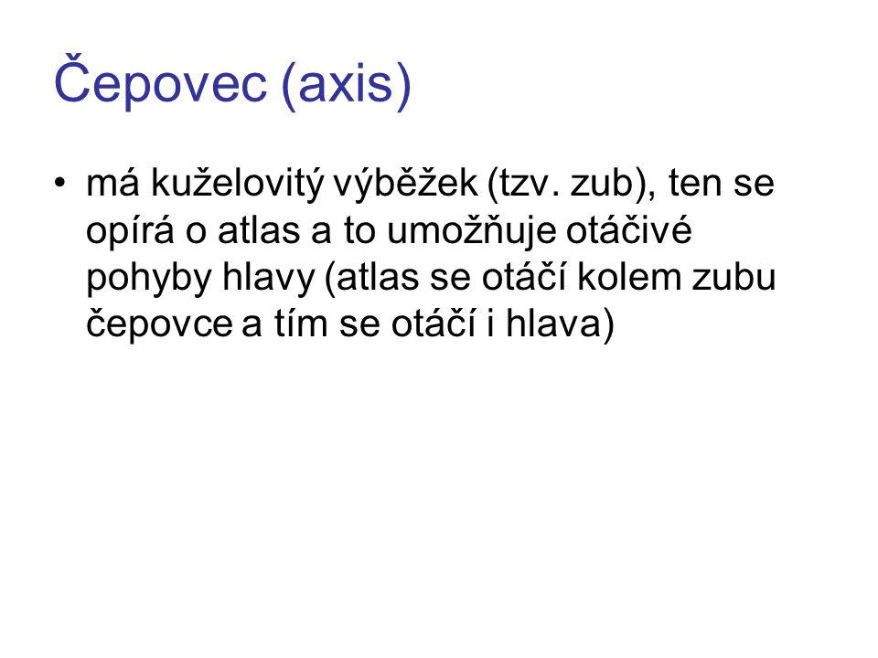 Čepovec (axis) Obr. 5 - Čepovec