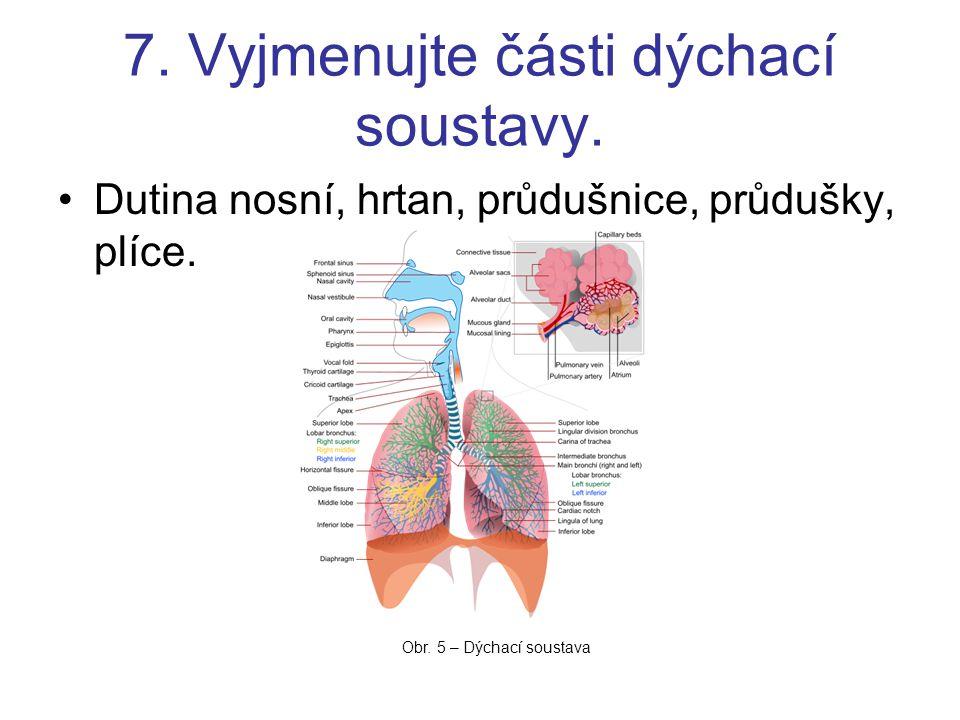7. Vyjmenujte části dýchací soustavy. Dutina nosní, hrtan, průdušnice, průdušky, plíce. Obr. 5 – Dýchací soustava