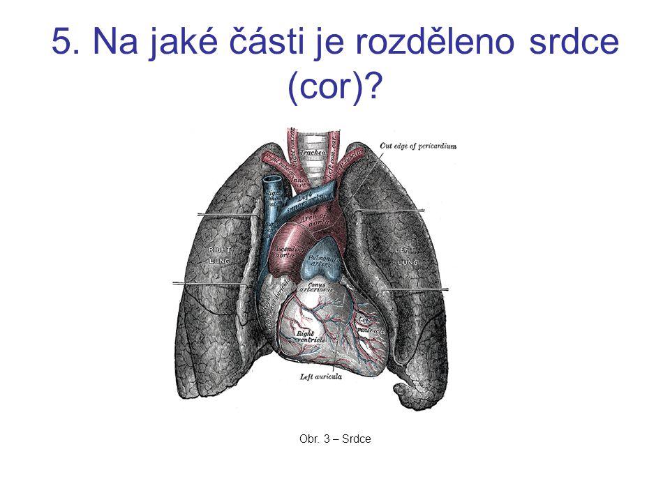 5. Na jaké části je rozděleno srdce (cor)? Obr. 3 – Srdce