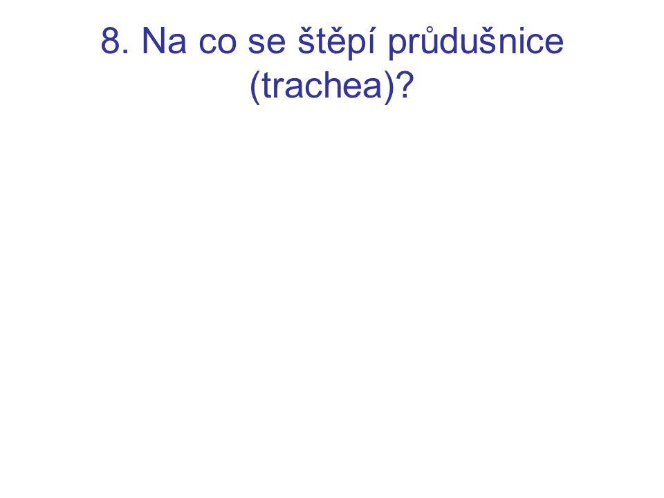 8. Na co se štěpí průdušnice (trachea)?
