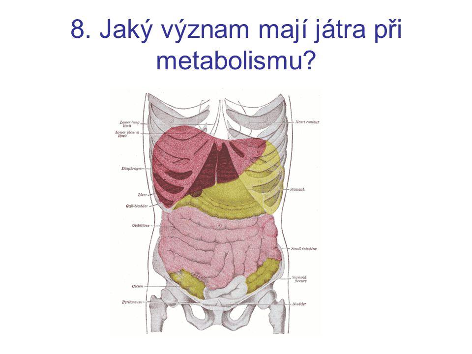 8. Jaký význam mají játra při metabolismu?