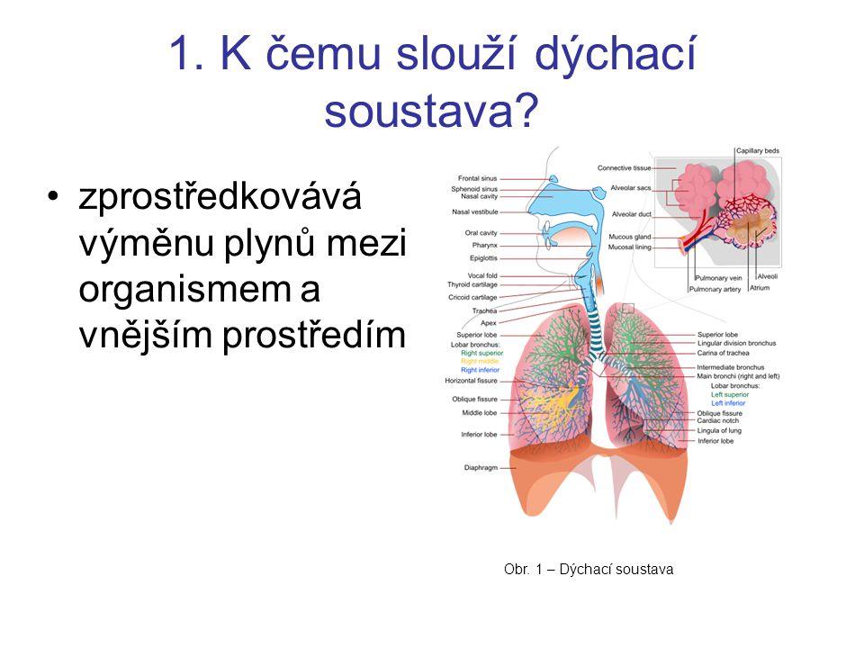 1. K čemu slouží dýchací soustava? zprostředkovává výměnu plynů mezi organismem a vnějším prostředím Obr. 1 – Dýchací soustava