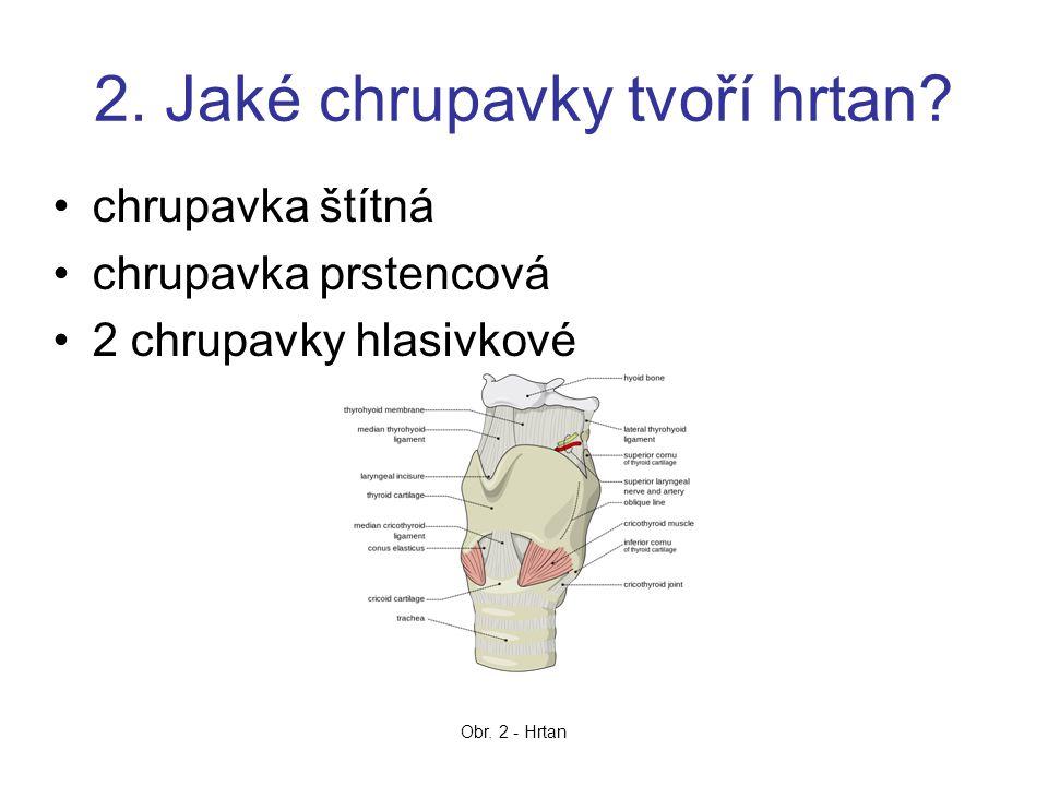 2. Jaké chrupavky tvoří hrtan? chrupavka štítná chrupavka prstencová 2 chrupavky hlasivkové Obr. 2 - Hrtan
