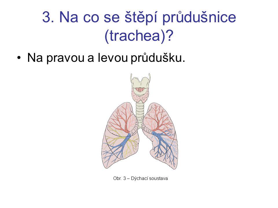 3. Na co se štěpí průdušnice (trachea)? Na pravou a levou průdušku. Obr. 3 – Dýchací soustava